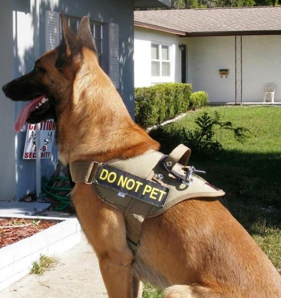 Redline K9 Patrol Dog Harness Dogsport Gear