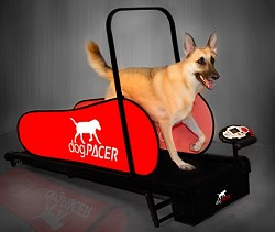 DogPacer Treadmill - Sorry Out of Stock