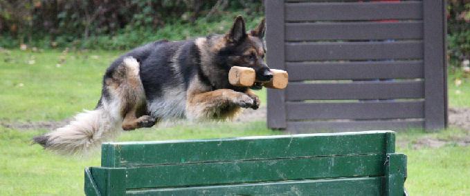 Schutzhund Obedience Dumbbells Dogsport Gear